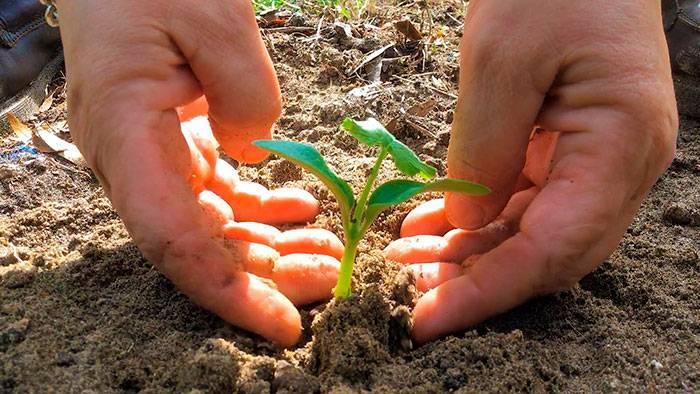 Когда и как сажать семена кабачков на рассадув 2021 году в домашних условиях