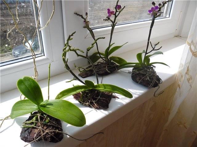 Кора для орхидей своими руками: как подготовить кору самостоятельно
