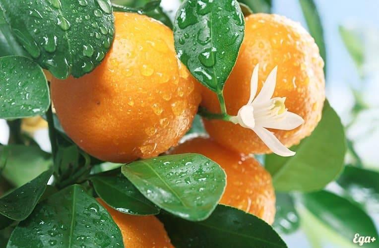 Какие витамины содержит мандарин