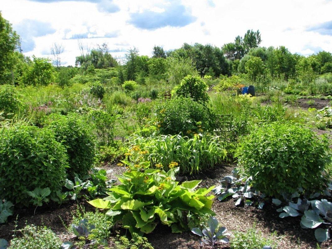 Пермакультура: практическое применение для сада огорода
