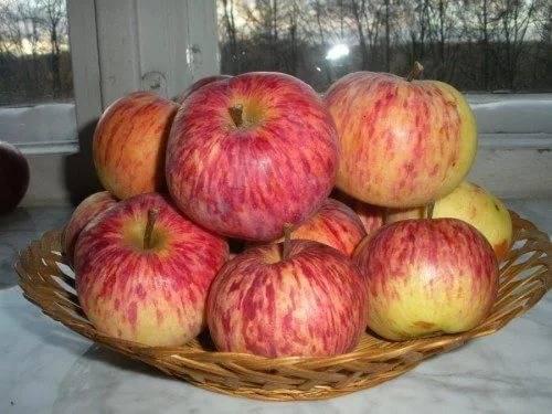 Яблоня грушовка - посадка и уход