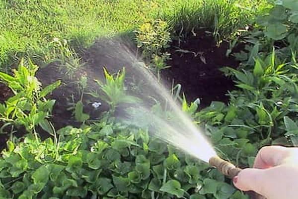 Как уничтожить сорняки на участке – эффективная борьба на даче, огороде + видео