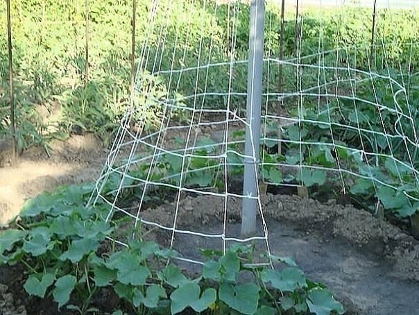 Выращивание огурцов в квартире: пошаговая инструкция от выбора сорта до сбора урожая, можно ли вырастить огурцы в подвале русский фермер