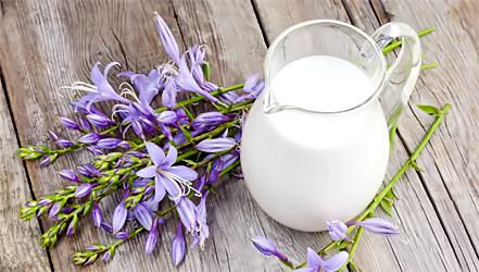 Чем полезно молоко овцы, состав и применение ценного продукта