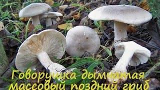 Говорушка булавоногая: описание гриба, фото
