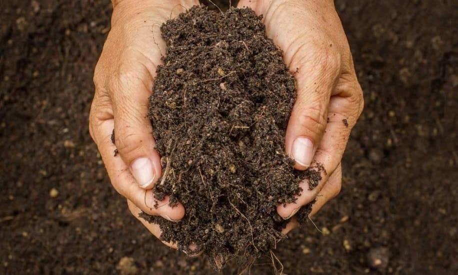 Весенняя подготовка почвы к посадке, повышение плодородия и борьба с вредителями и болезнями.