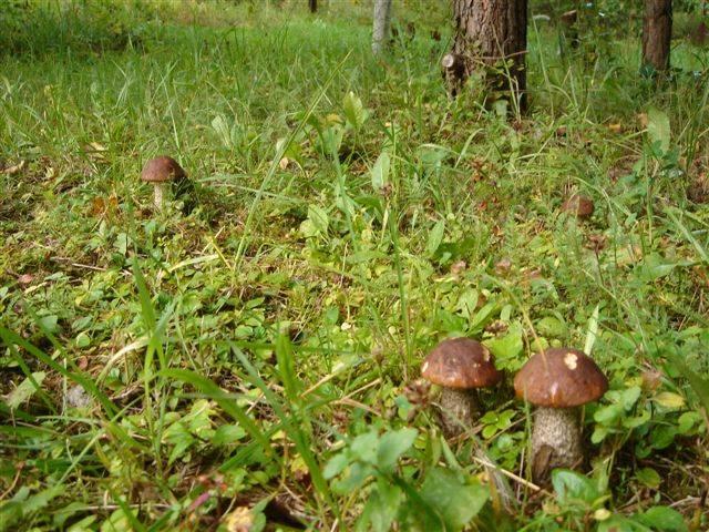 Топ грибных мест подмосковья