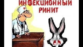 ᐉ как лечить насморк у кроликов? - zooon.ru