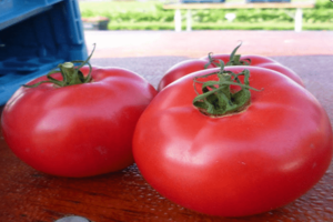 Томат алези (f1): описание гибрида помидоров, его преимущества и недостатки, урожайность, советы о том, как его вырастить