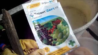 Меры борьбы с клещами на винограде: препараты от паутинного и войлочного клеща (виноградного зудня)