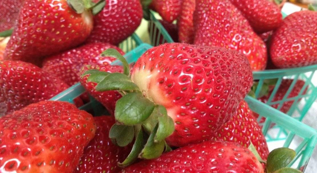 Крупноплодные сорта клубники с фотографиями и описанием