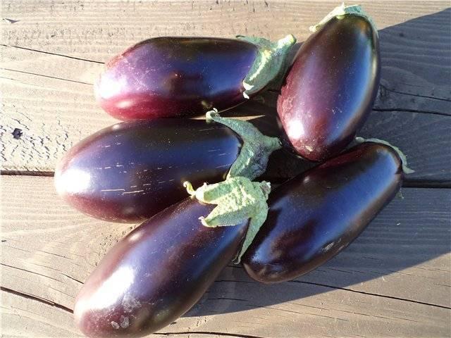 Баклажан японский карлик: описание и характеристика раннего сорта, выращивание, сбор и хранение урожая