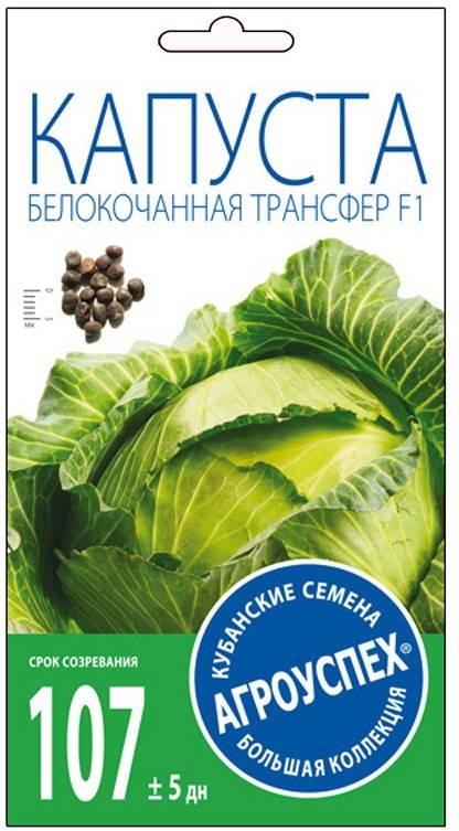 Описание сорта капусты леннокс f1