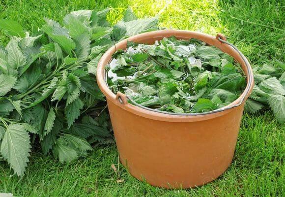 Удобрение из крапивы: как приготовить, для каких растений