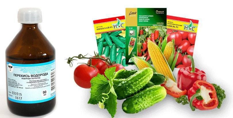 Причины обработки семян огурцов перед посевом и самые эффективные способы