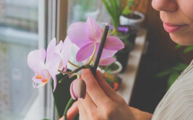 Почему вянут листья орхидеи: разные случаи
