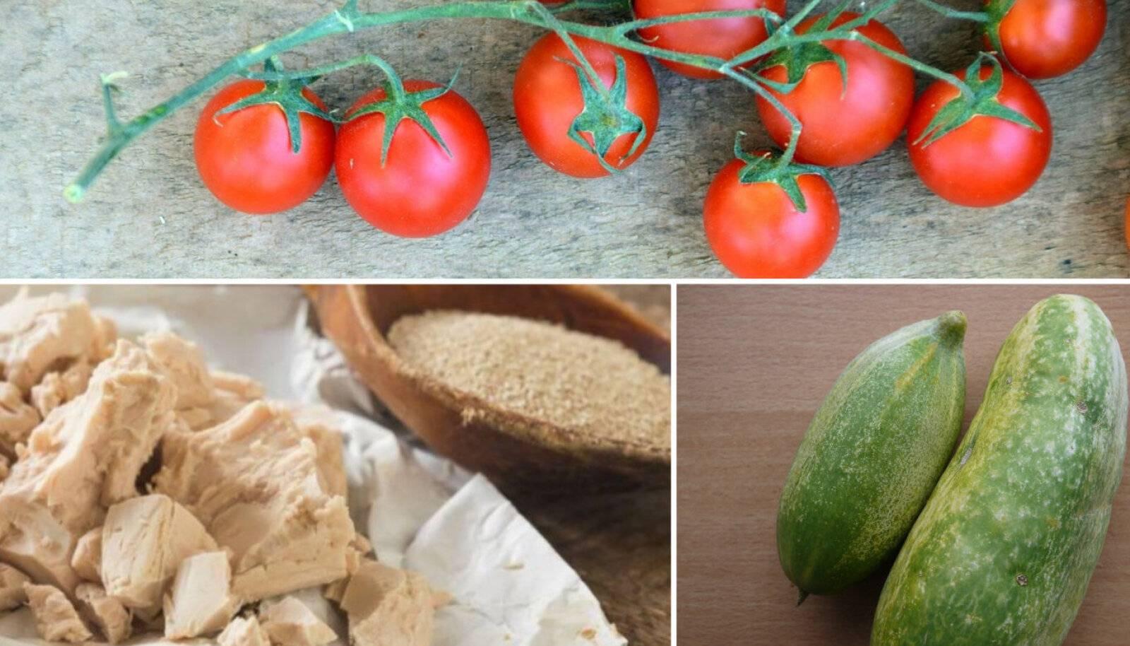 Как подкормить огурцы дрожжами: пропорции, как и когда удобрять