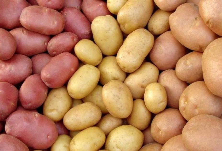 Самые вкусные сорта картофеля: особенности урожайных видов, отзывы о них | спутниковые технологии