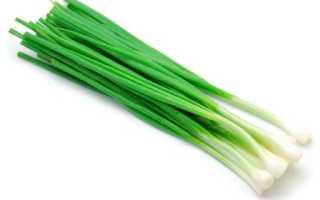 Как вырастить лук-севок из семян в открытом грунте