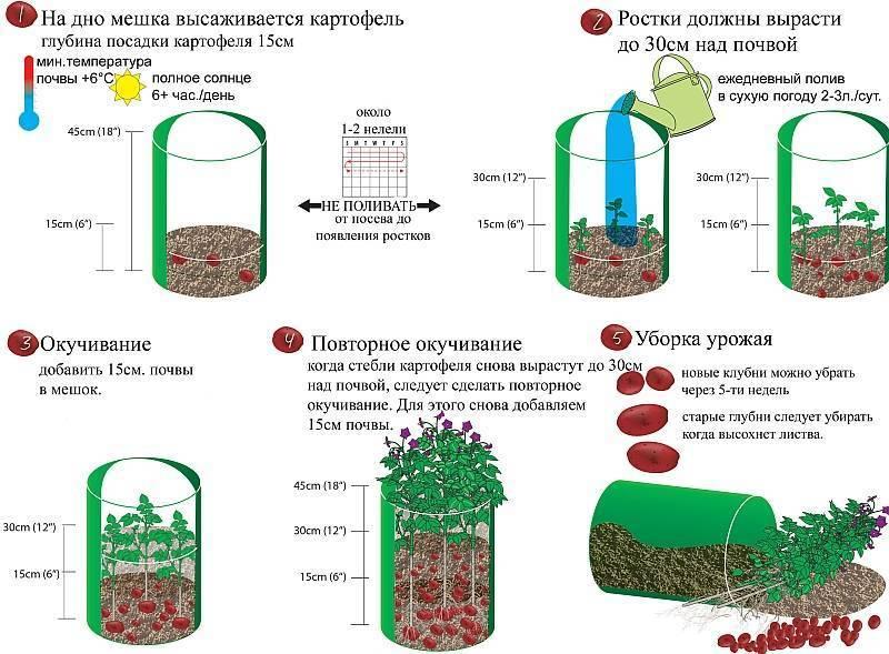 7 способов выращивания картошки, которые увеличат ваш урожай. фото — ботаничка.ru