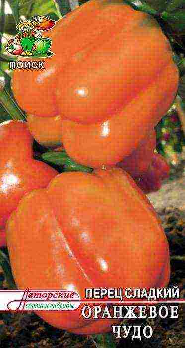 Перец зорька отзывы фото урожайность - дневник садовода