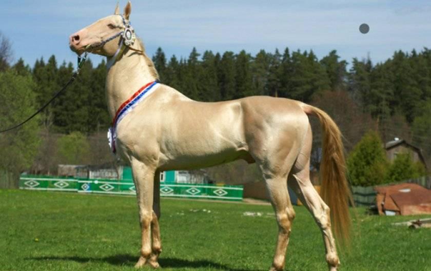 Масти лошадей:названия и фото    мои лошадки