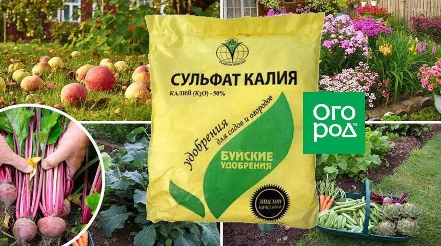 Удобрение сульфат калия - применение на огороде и садоводстве