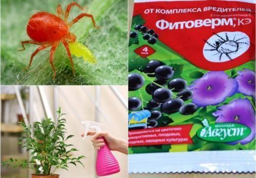 Фитоверм для комнатных растений: инструкция по применению