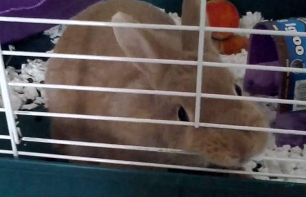 Что делать если укусил декоративный кролик?