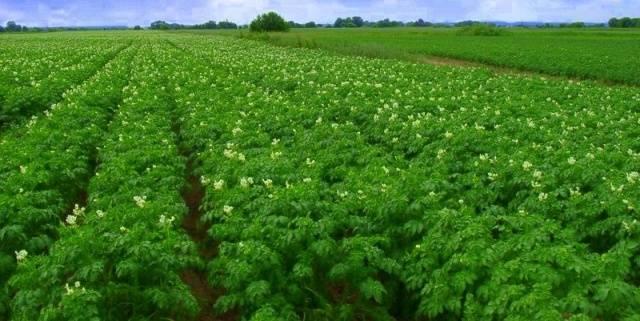 «лазурит»: инструкция по применению препарата для сорняков