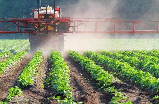 Скручивание листьев у картофеля: причины, лечение — selok.info