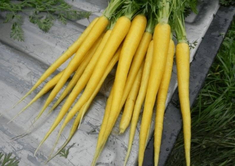 Почему морковка стала оранжевой? до 19 века морковь была фиолетовой!