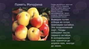 Яблоня память ульянищева: особенности сорта и ухода