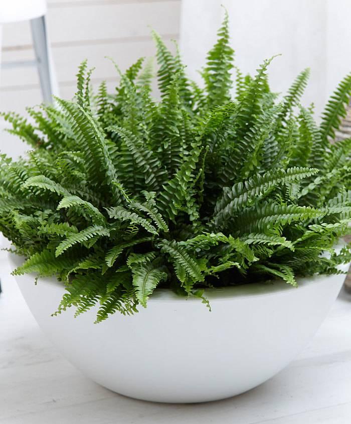 Тенелюбивые комнатные растения: каким цветам не нужен яркий свет