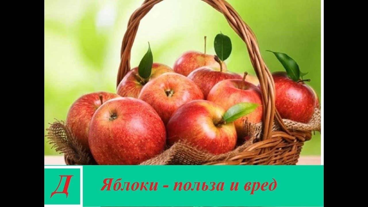 Косточки яблок: польза и вред, состав, можно ли есть   zaslonovgrad.ru