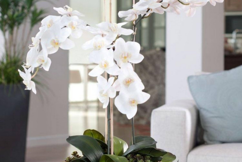 Распространенные виды орхидеи
