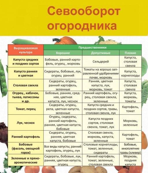 Предшественники овощей при посадке: таблица