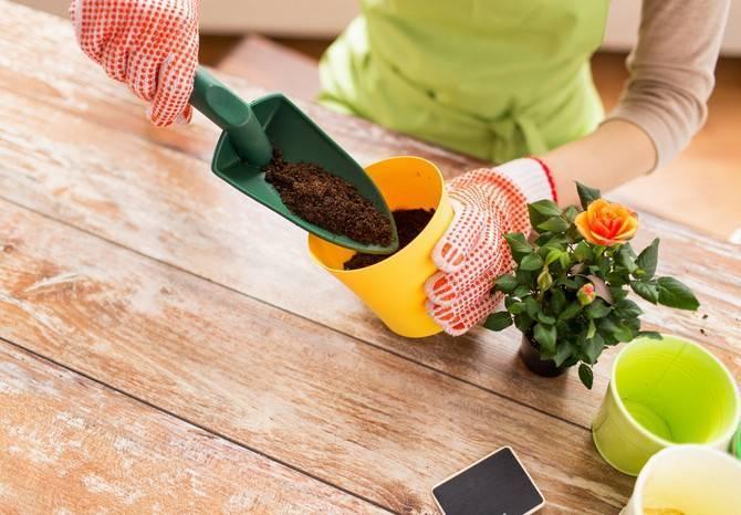 Когда и как пересаживать комнатные растения: фото, этапы и правила