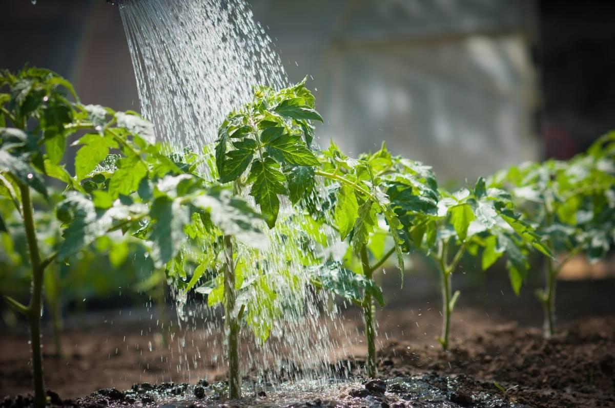 Дрожжевая подкормка для растений: рецепт приготовления раствора
