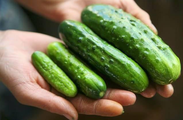 Как сохранить свежие огурцы в холодильнике на зиму.  выбираем место для хранения и способ   дачная жизнь