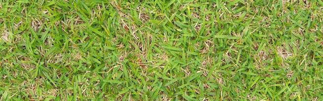 Как сажать газонную траву: инструкции и советы