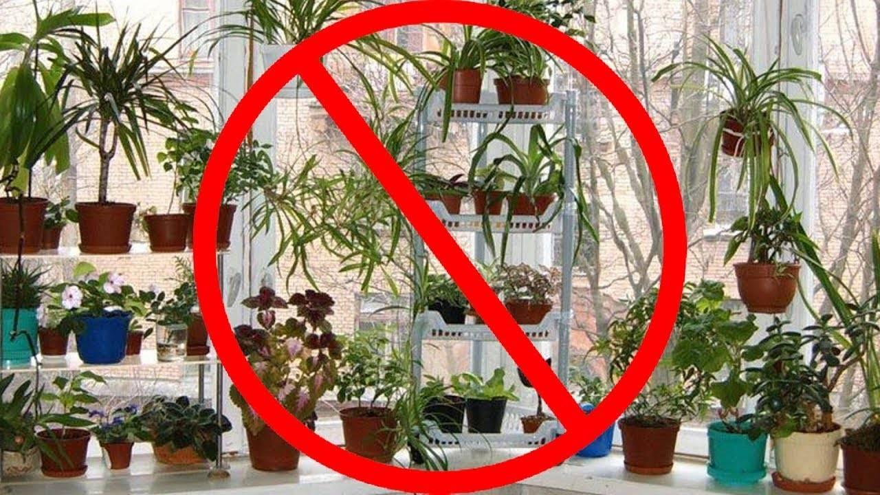 По фен-шуй: эти растения принесут счастье и благополучие в ваш дом