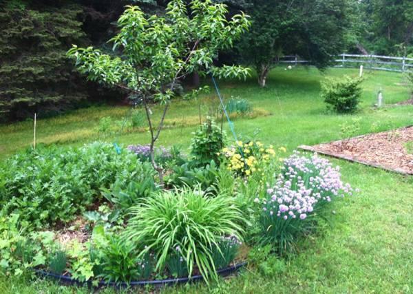 7 принципов пермакультуры или ваш сад-огород без химии - lookbio журнал для тех, кто ищет bio