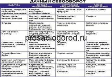 Севооборот растений на даче в огороде, чередование культур при выращивании на sotkiradosti.ru