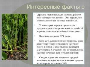 Морковь: польза и химический состав   food and health