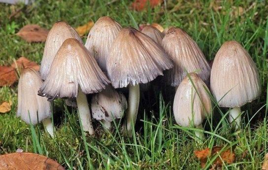 Питание грибов: способы, по типу автотрофы или гетеротрофы