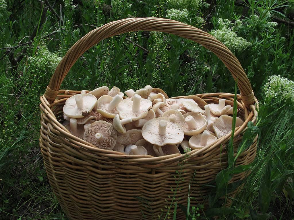 Виды грибов: 120 фото с подробным описанием внешнего вида