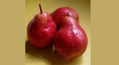 Сорт с необыкновенно красивыми плодами — груша «кармен»