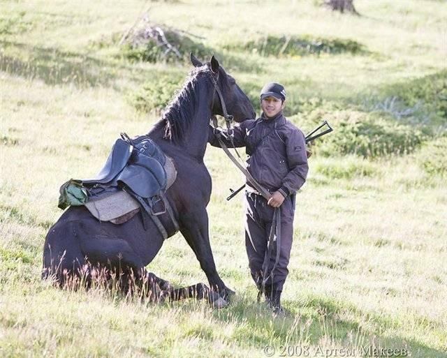 Вся информация о карачаевской породе лошадей