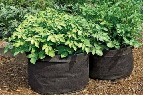 Технология выращивания картофеля в ящике или бочке - выращивание и уход   описание, советы, отзывы, фото и видео